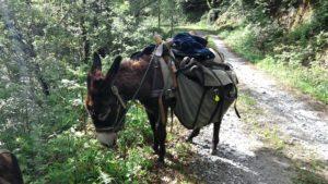 balad avec un âne à Laguépie