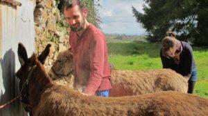 pansage des ânesses, l'âne qui vole Laguépie