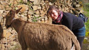 ânesses Rillette et Vinciane, ânière de l'âne qui vole