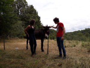 L'âne Toto dans son près
