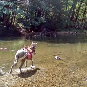 Rillette pieds dans l'eau